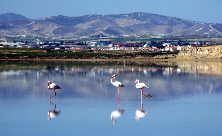 Фламинго_на_озере_в_Ларнаке