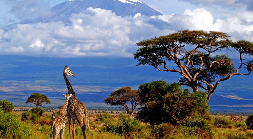 Freewallker-Kilimanjaro-expedition-2