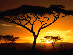 africa_big