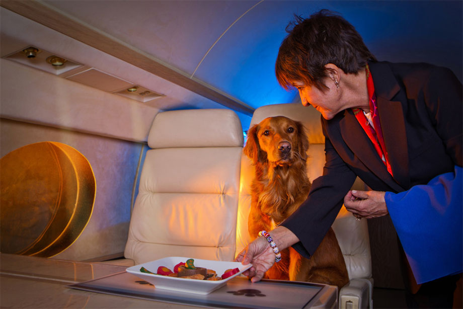 dog_in_plane