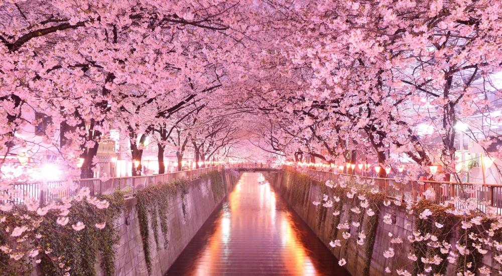sakura_2015_fujitravelru-0